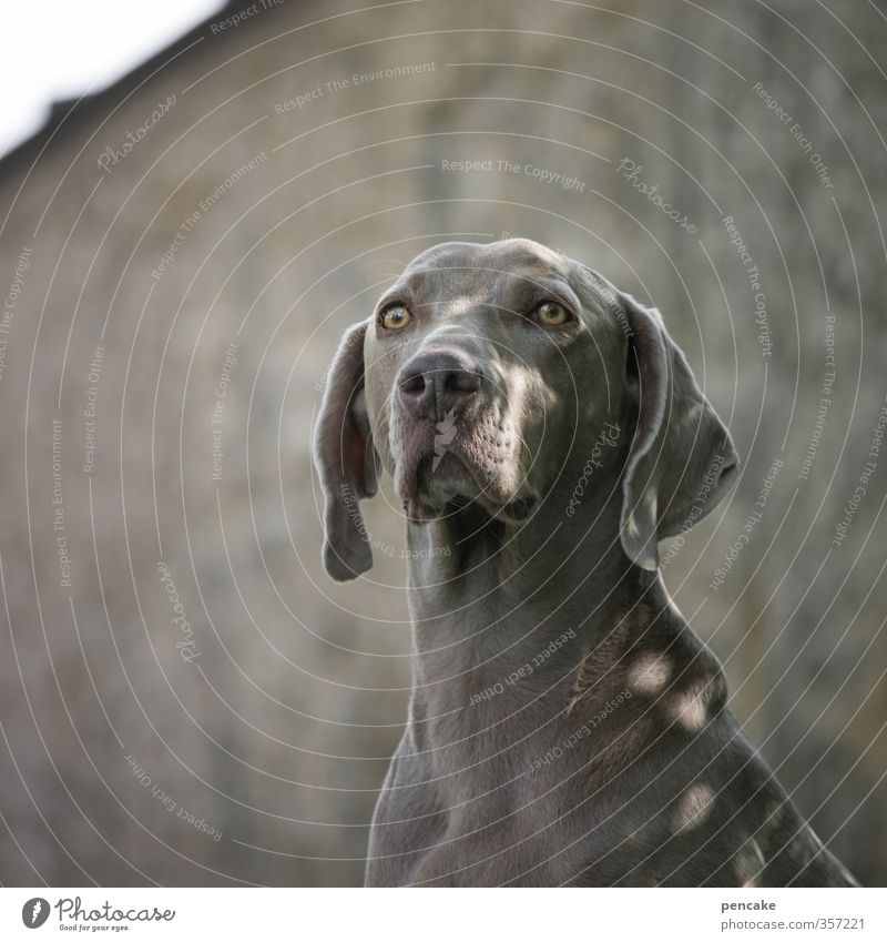 AST6 Inntal | TiAmo! Natur Sommer Park Haustier Hund 1 Tier Stein Zeichen Wärme feminin weich gold grau Stimmung Glück Vertrauen Sicherheit Tierliebe
