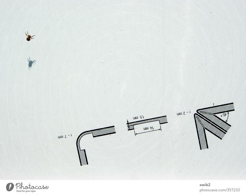 Fremdwohner Technik & Technologie Technische Zeichnung Konstruktion planen Ecke Maßeinheit Linie Strukturen & Formen Ziffern & Zahlen Tier Spinne 1 Bewegung