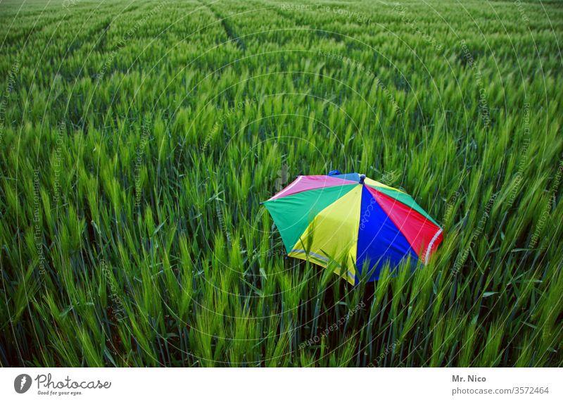 Farbkombination I grün trifft bunt Regenschirm regenbogenfarben Feld Sonnenschirm Sommer Wind Landwirtschaft frisch Kornfeld abgeschirmt Schutz vergessen