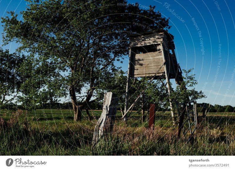 Jagdkanzel im Abendlicht Hochsitz Landschaft Jäger Farbfoto Holz Außenaufnahme Feld Ansitz Abenddämmerung Baum grün Natur Menschenleer