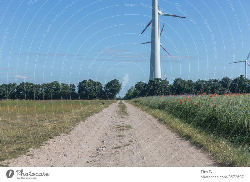 Hase Windpark Hase & Kaninchen Feld Wege & Pfade Außenaufnahme Tier Tag Wildtier Menschenleer Umwelt Wiese Landschaft Farbfoto Natur 1 Gras Windkraftanlage