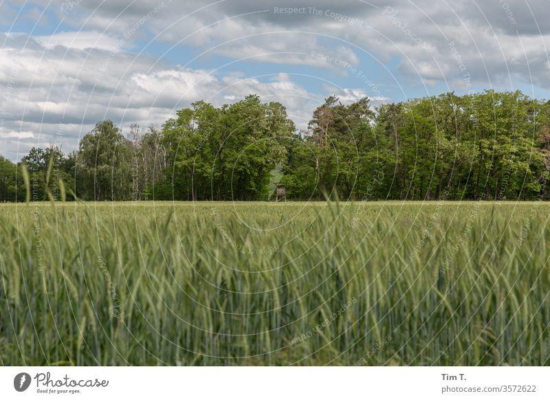 Brandenburg Getreide Feld Korn Sommer Himmel Landwirtschaft Ähren grün Kornfeld Ackerbau Ernährung ökologisch Umwelt Getreidefeld Außenaufnahme Wachstum Pflanze