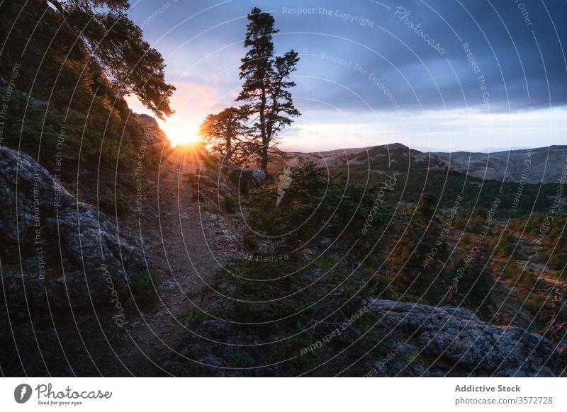 Pfad auf einem Hügel in der Nähe eines Berghangs im Wald während des Sonnenuntergangs im Herbst Weg Berge u. Gebirge grün Natur Boden wunderbar Baum Windstille