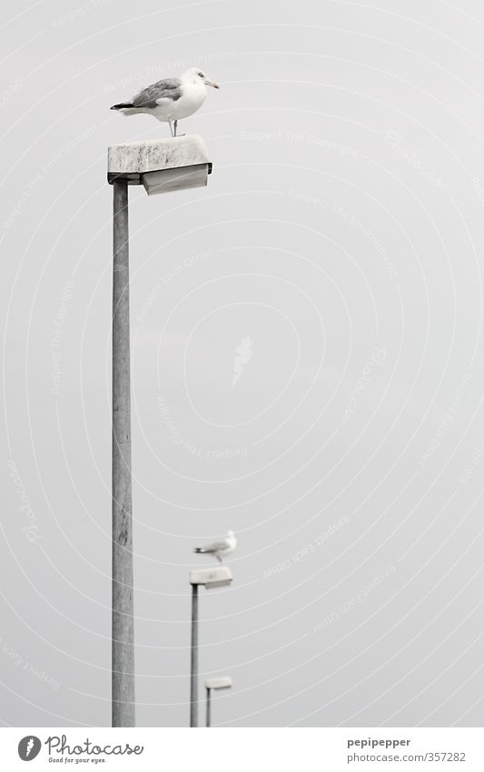 | | | Ferien & Urlaub & Reisen Sommer Tier Strand Küste Lampe Linie Vogel Wildtier warten Möwe schlechtes Wetter Hafenstadt hocken
