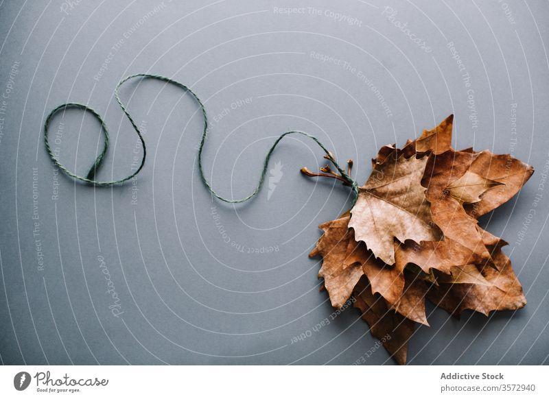 Bündel trockener Ahornblätter auf grauer Oberfläche Blatt Haufen Zusammensetzung Luftballon Natur Konzept Layout Form trocknen Seil Saison Herbst hell natürlich