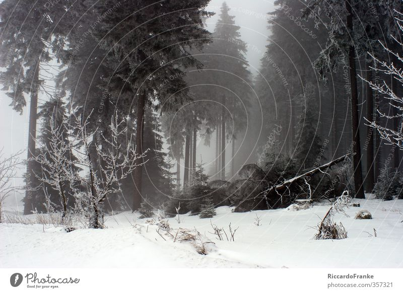 Winterwald Natur Landschaft Nebel Eis Frost Schnee Wald kalt natürlich grün weiß Romantik Zufriedenheit Einsamkeit Freizeit & Hobby Idylle Tourismus Farbfoto