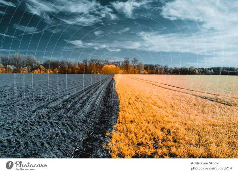 Schneebedecktes Kulturland bei kaltem, schönstem Winterwetter Feld verschneite Baum kultivieren Ackerland Frost Ernte Ackerbau Landschaft gefroren ländlich