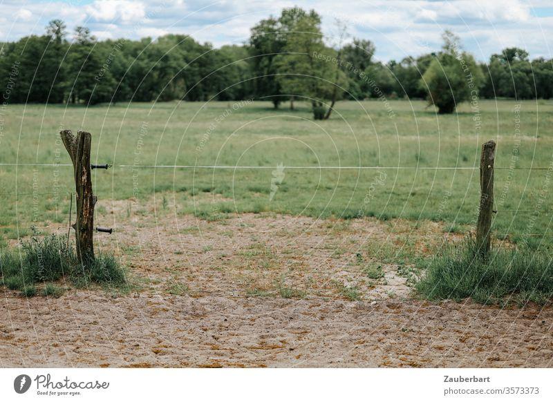 Grüne Weide, Band zwischen den Holzpfählen eines elektrischen Weidezauns, Sand, Wiese und Büsche Zaun Elektrozaun grün Feld Land Landwirtschaft Pfahl Holzpfahl