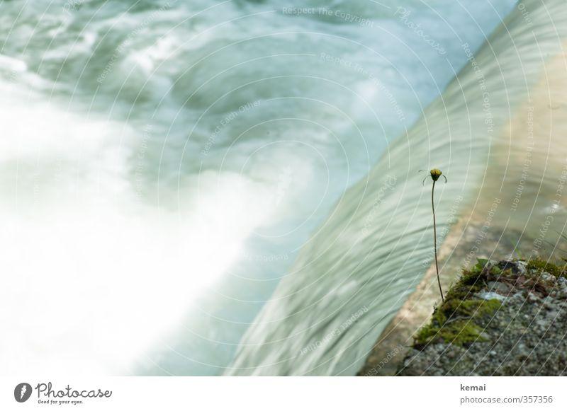 AST6 Inntal | Stufenwasser II Umwelt Natur Pflanze Wasser Sonnenlicht Sommer Schönes Wetter Blume Küste Bach Fluss Wachstum kalt nass Energie Geschwindigkeit
