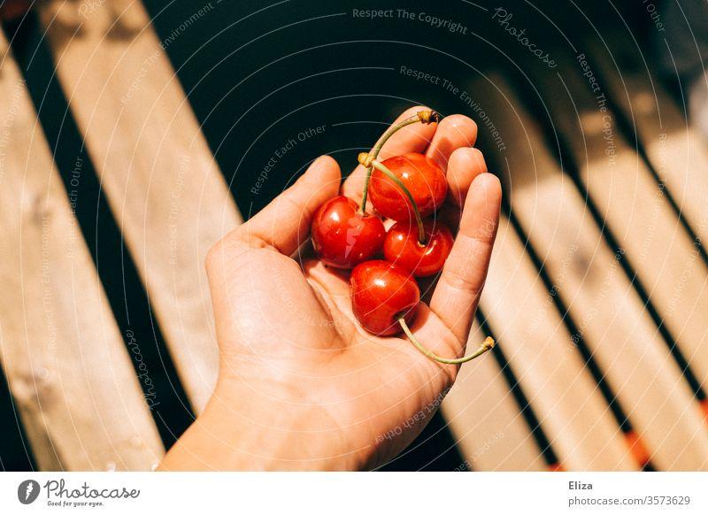 Vier Kirschen in einer Hand im Sonnenlicht halten lecker essen Obst Sommer Ernährung rot reif Frucht Steinobst draußen warm Holz hell Kontrast