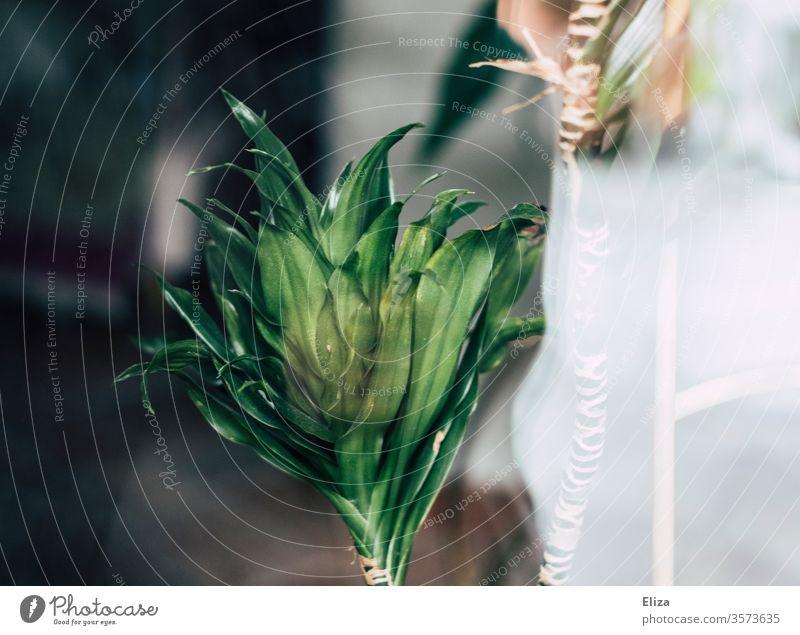 Grüne Zimmerpflanze (weiß jemand wie die heißt? :D ) grün Pflanze dekorativ Spiegelung Blätter Natur zuhause drinnen Botanik