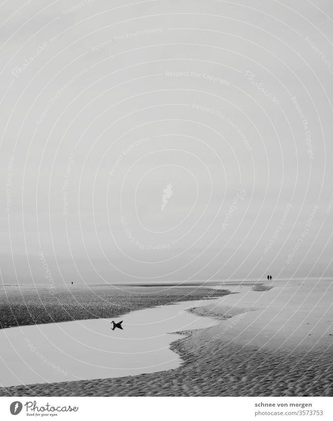 Seeblick mit romantisch-tragischer Attitüde mit glücklicher Möwe Meer & Ozean Stand Sand Fluss Watt Flut Ebbe Ruhe weite Horizont