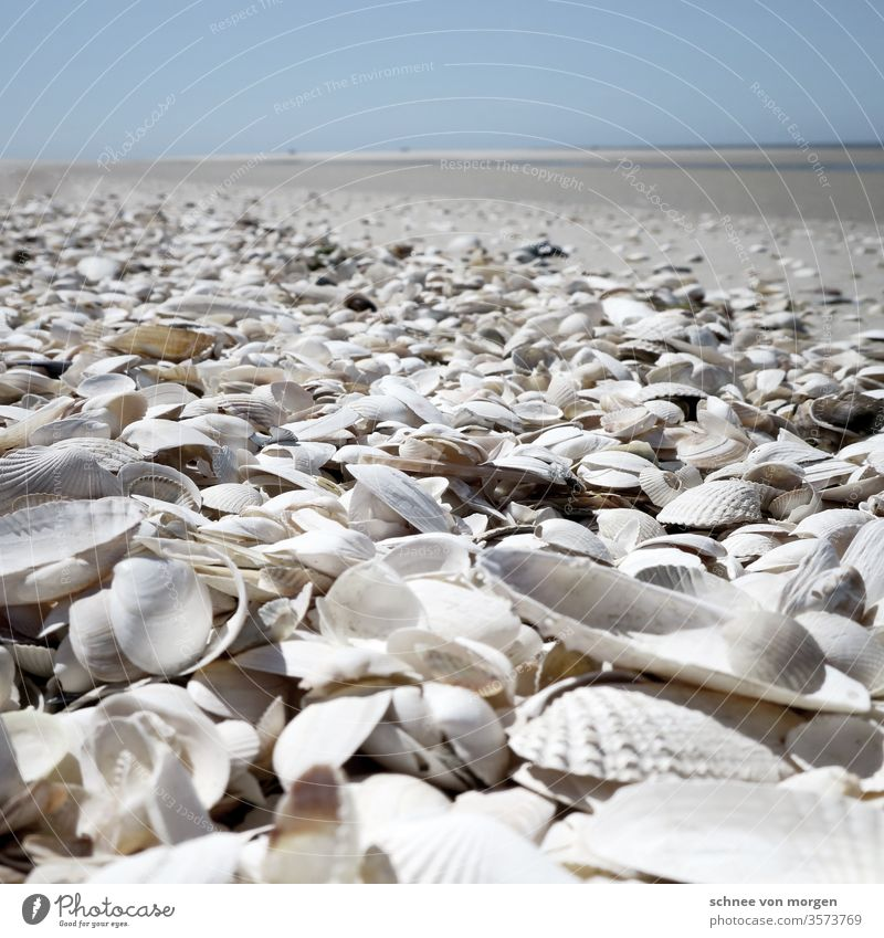 weisse muscheln am strand meer weite horizont himmel sand Natur Küste Wasser Ferne Wellen Meer Ferien & Urlaub & Reisen Menschenleer Himmel Erholung Landschaft