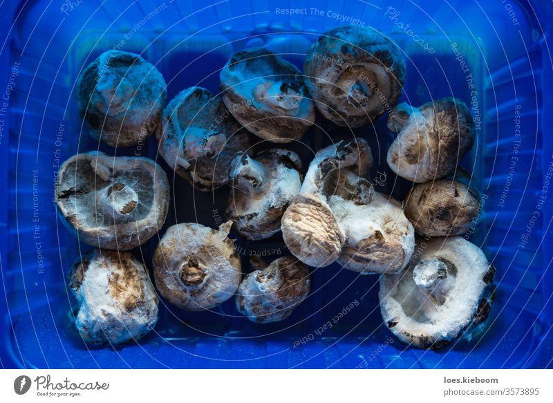 Luftaufnahme von verschimmelten Champignonpilzen in einem Plastikbehälter, der Lebensmittelabfälle symbolisiert Pilz schimmelig Schimmelpilz alt Abfall