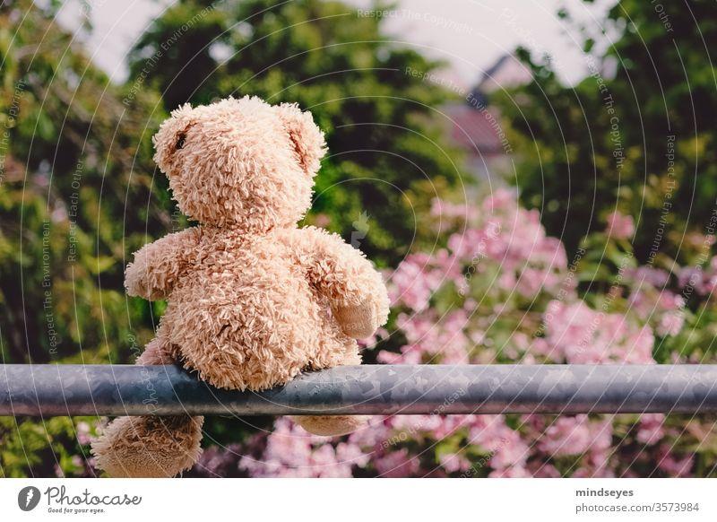 Teddybär sitzt auf einer Stange stange blüten busch nachdenklich aussenaufnahme kindheit natur spielen spielzeug Tag Stofftiere Farbfoto Außenaufnahme