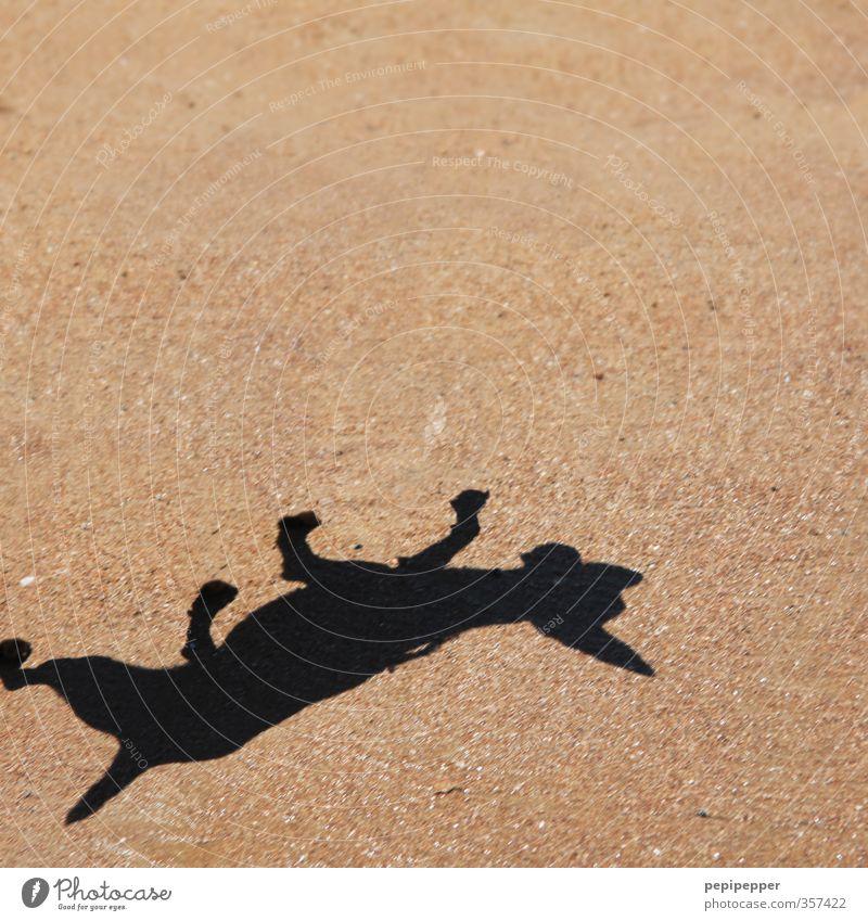 mach mal männchen Freizeit & Hobby Sommer Strand Sand Wärme Küste Tier Haustier Hund Pfote 1 Fährte Bewegung drehen fangen springen Tanzen gold Außenaufnahme