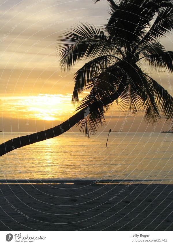 Sonnenuntergang2 Wasser Strand Palme Malediven
