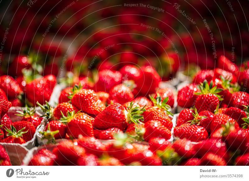 Wochenmarkt - frische Erdbeeren in Schälchen Marktplatz Gemüse Obst Marktstand nachhaltig gesund Bioprodukte Händler verbraucher Käufer Verkäufer kaufen