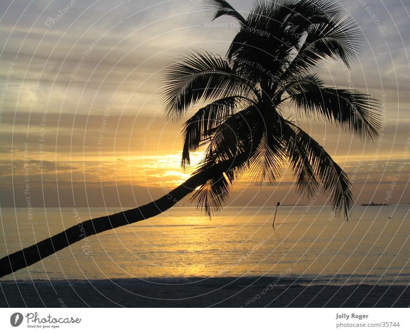 Sonnenuntergang1 Wasser Strand Palme Malediven Afrika