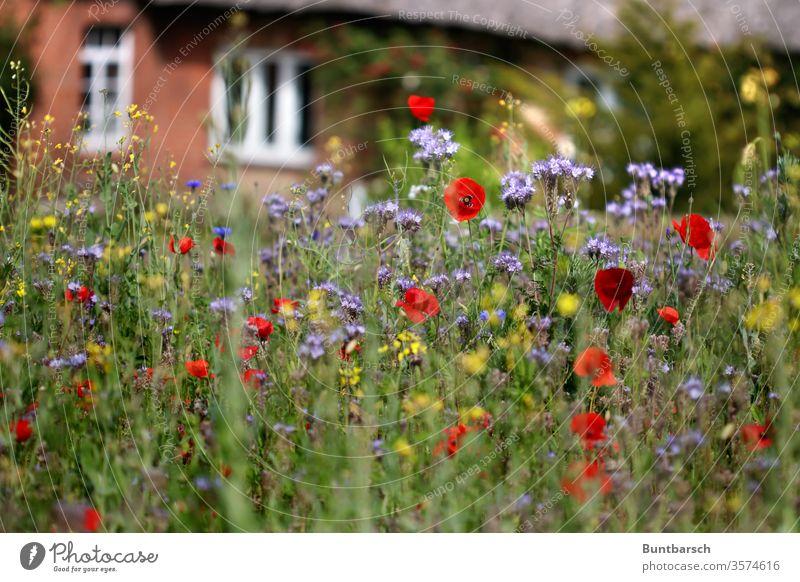 Dorfwiese Reetdach Wiese Wildblumen Außenaufnahme Natur Pflanze Frühling Sommer Garten Blühend Menschenleer Gras Farbfoto Blume Blüte Unschärfe Wachstum schön