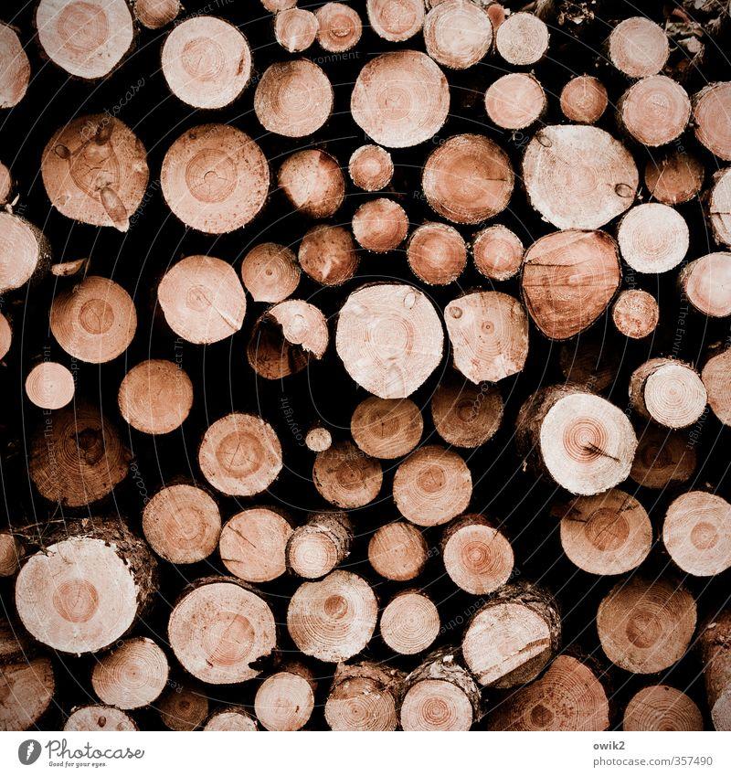 Schnittstellen braun rund viele dünn Baumstamm dick Stapel Nutzpflanze Durchschnitt Jahresringe