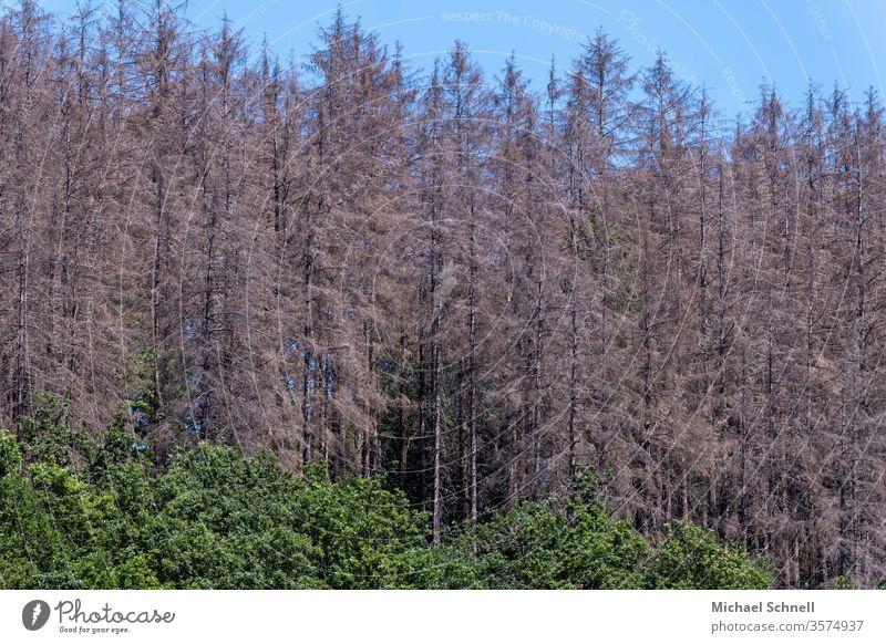 Fichtenwald: Schäden nach Dürre (2019) und durch Borkenkäfer Trockenheit Umwelt Natur Wald Baum Klimawandel Tag Menschenleer Waldsterben Pflanze bedrohlich