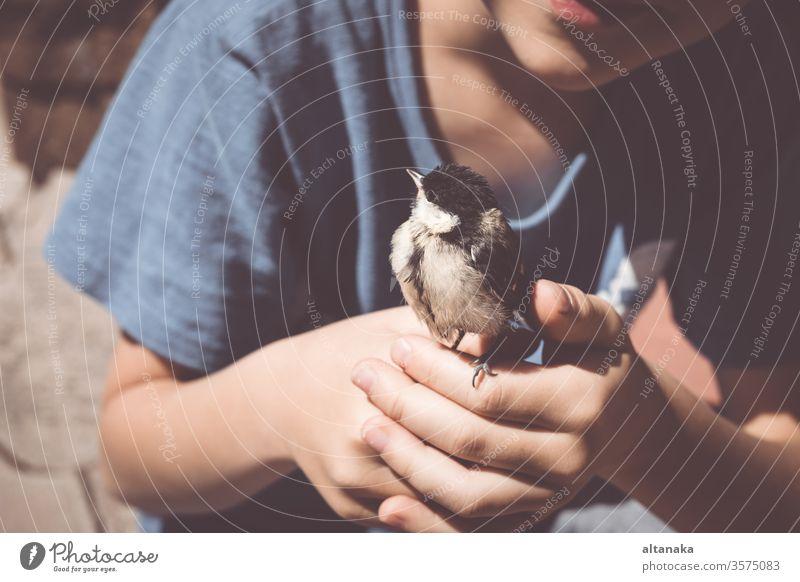 Der kleine Junge spielt tagsüber mit einem Küken. Art Kind Vogel Hand Pflege Tier niedlich Natur im Freien Leben Feder Beteiligung Finger Tierwelt Menschen wild