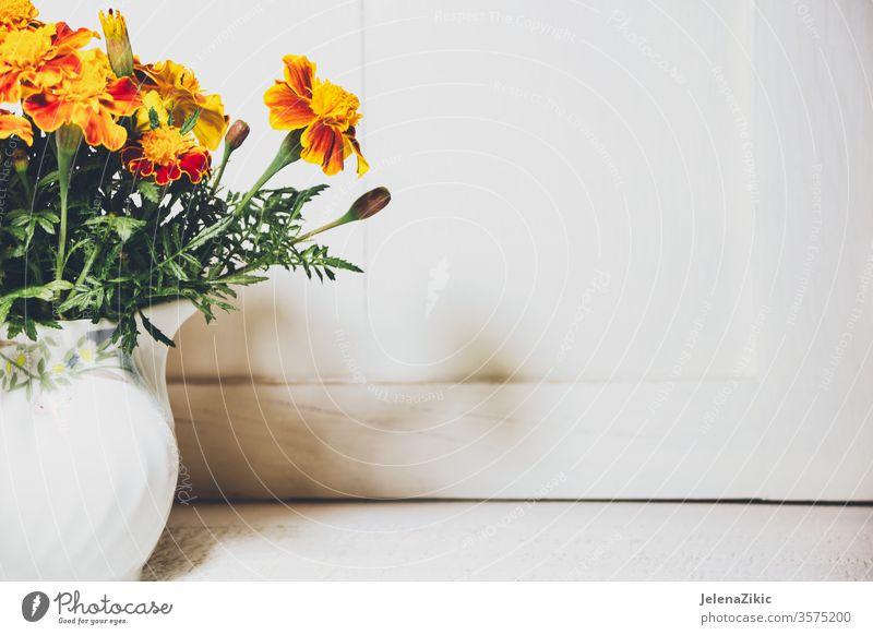 Blumen im Herbst Garten Ringelblume Blütezeit orange Farbe frisch Natur abschließen geblümt tagetes Überstrahlung Pflanze natürlich Flora Nahaufnahme grün