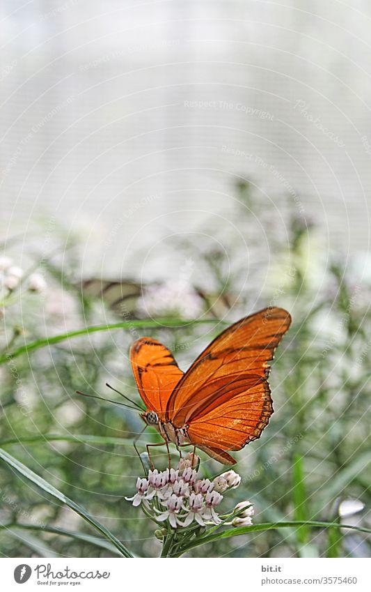 Haute Couture l im Falterrock Schmetterling Insekt Nahaufnahme butterfly Tier Blume Blüte orange schön bunt Pflanze Natur natürlich Fressen Nahrungssuche Essen