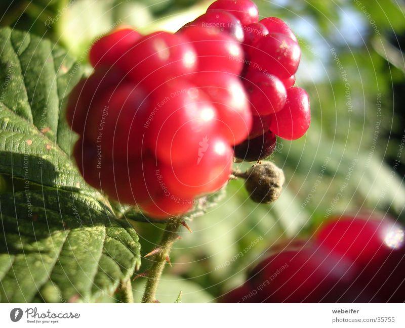 Beere rot Beeren