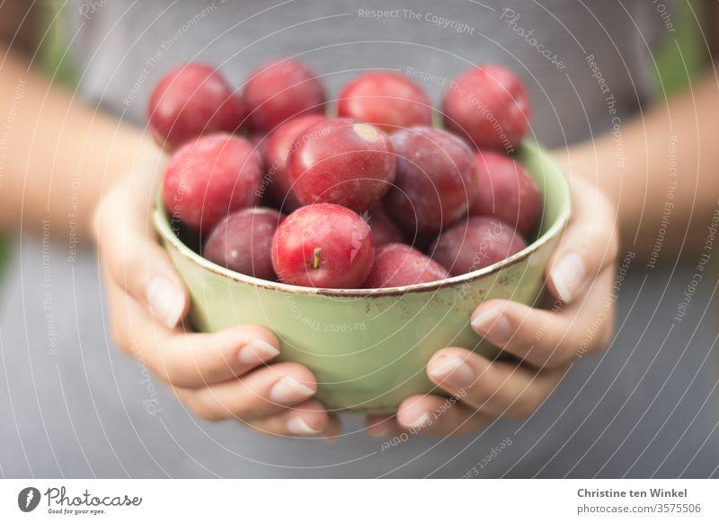 junge Frau hält eine Schale mit roten frischen Pflaumen vor sich in den Händen Frucht Lebensmittel saftig Ernährung Gesunde Ernährung Vegetarische Ernährung