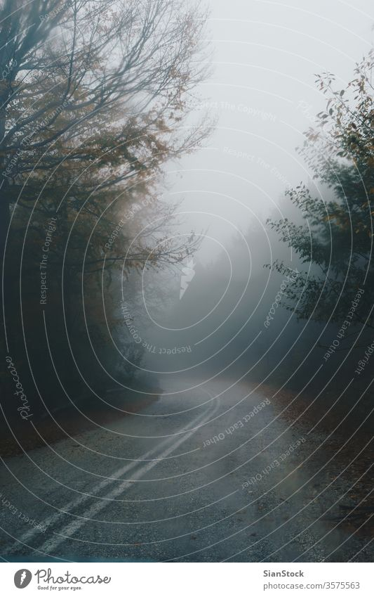Herbstliche Landschaft, neblige Straße im Wald Nebel Natur Weg Griechenland evros Rodopi Baum Licht grün Morgen Hintergrund dunkel Morgendämmerung Mysterium