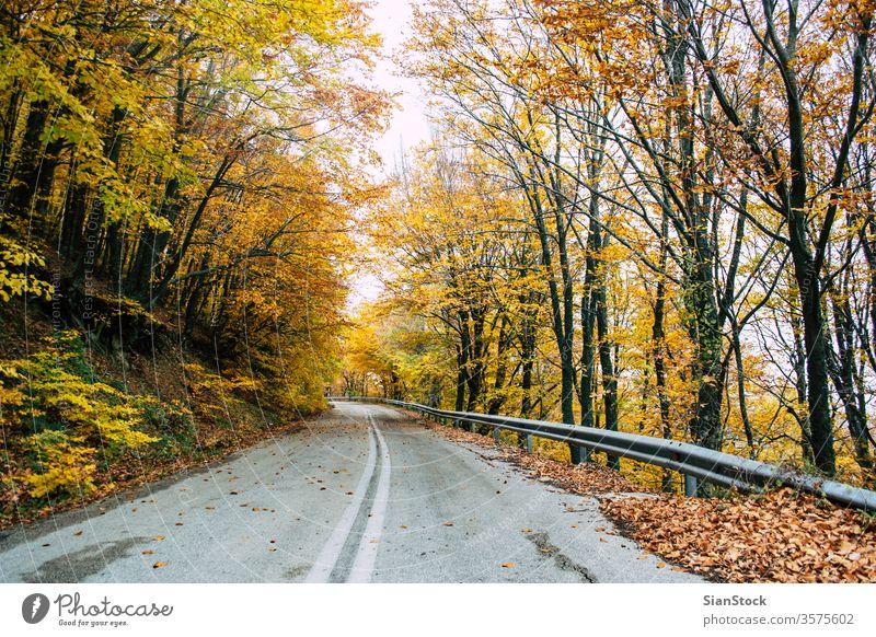 Straße im gelben Herbstwald, Naturlandschaft Wald fallen Baum Bäume Landschaft Blätter Hintergrund schön Park Laubwerk Saison grün orange Licht Sonne rot Farbe