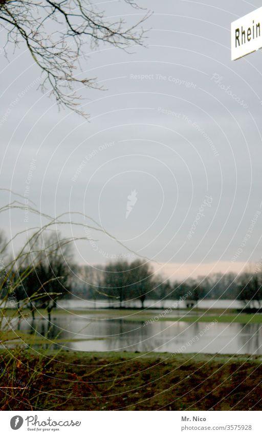 Rhein Hochwasser Wasser Fluss Natur Umwelt Flussufer Landschaft Klima Klimawandel Erholungsgebiet Nordrhein-Westfalen Idylle Wiese natürlich