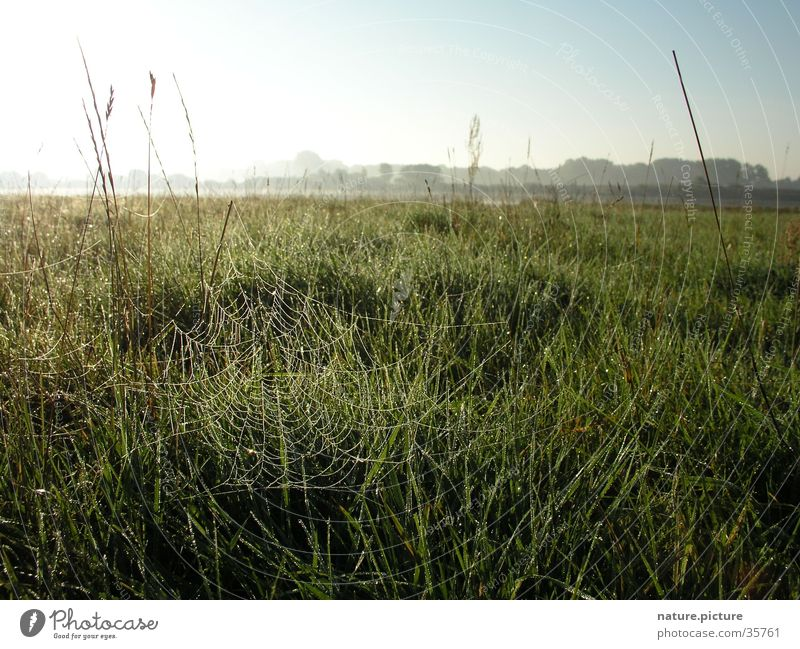 Spinnennetz mit Morgentau Tau Wassertropfen Flußauen Gegenlicht Wiese Gras Halm Sonne Elbe