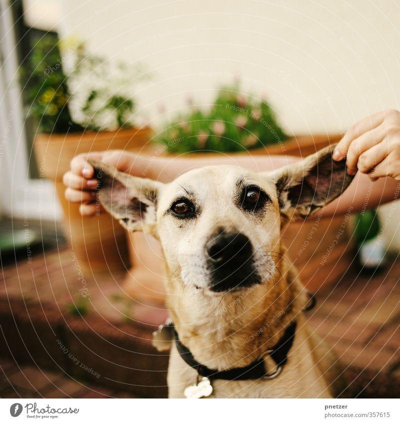 Dumbo Hund Mensch Natur Hand Freude Tier Umwelt Tierjunges Gefühle Spielen Glück Garten Freundschaft Stimmung Freizeit & Hobby Zufriedenheit