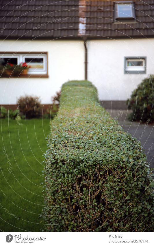 Nachbarschaften  deine Seite meine Seite Hecke Garten Grundstück Grenze grün grundstück strauch pflanze nachbarschaftsstreit grundstücksgrenze sichtschutz