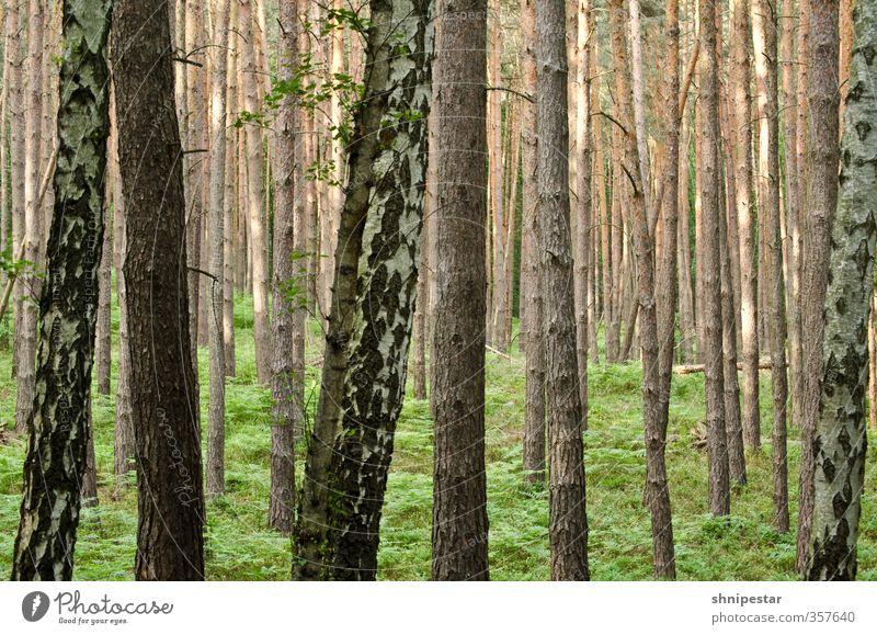 The Forest Leben Wohlgefühl Zufriedenheit Sinnesorgane Erholung ruhig Ausflug Freiheit wandern Hiking Umwelt Natur Landschaft Pflanze Urelemente Klima Baum Gras