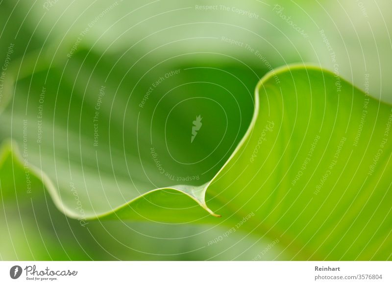 Blüte des Lebens Frühling Überstrahlung Natur grün Blume Pflanze geblümt frisch natürlich Garten Nahaufnahme Blatt Beautyfotografie Farbfoto Hintergrund