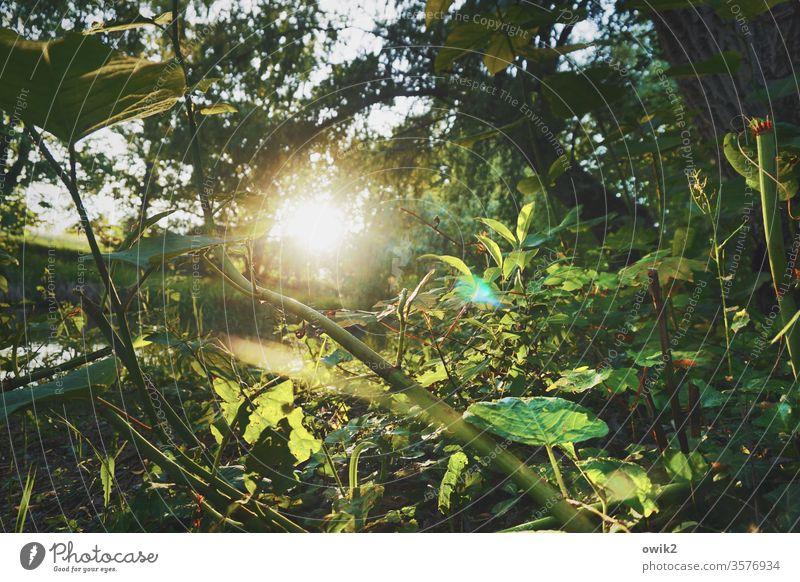 Unterholz Waldboden unten Pflanzen Natur Sonne Sonnenlicht Gegenlicht strahlend leuchten Sonnenuntergang Abend geheimnisvoll Blätter Zweige u. Äste