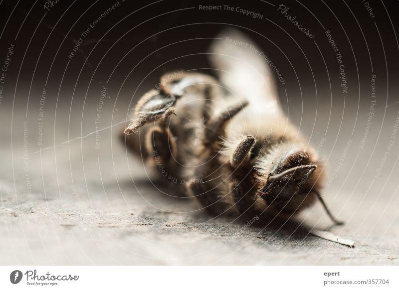 + gefallen + Tier Totes Tier Flügel Wespen Insekt Spinnennetz 1 dunkel Tod Ende Natur Vergänglichkeit Farbfoto Gedeckte Farben Innenaufnahme Nahaufnahme