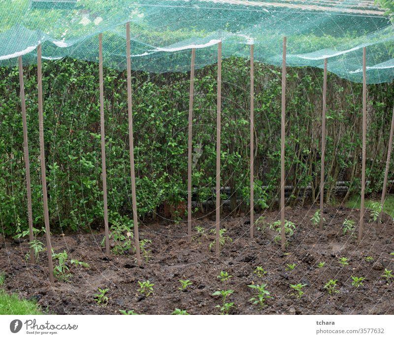Hagel in einem Schutznetz über Gemüsepflanzen abgeschirmt Schutzschild deckend Wartehäuschen schlecht Inszenierung ländlich Sommer Ackerbau Frühling Schonung