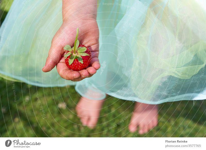 Vierjähriges Mädchen mit Tüllrock hält eine Erdbeere in der Hand Erdbeeren Kindheit jung Beeren Lebensmittel Frucht im Freien Sommer Kaukasier Rock Glück
