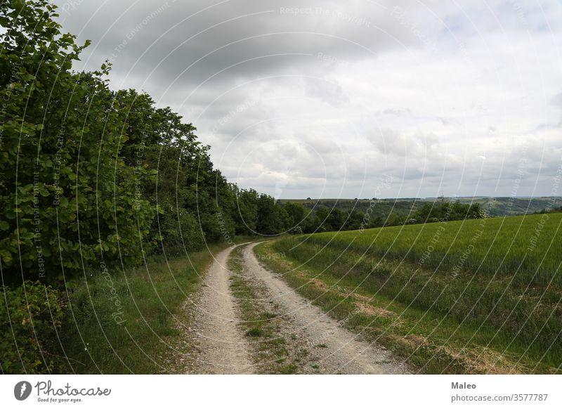 Sommerlandschaft mit Getreidefeldern an einem bewölkten Tag Feld Weizen Himmel blau Landschaft Cloud Natur Pflanze Ackerbau Müsli Ernte Bauernhof ländlich gelb