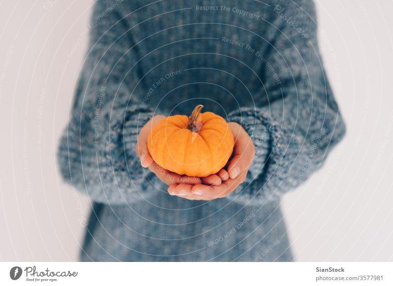 Frauenhände halten Kürbis. Halloween, Erntedankfest wenig Beteiligung Frucht vereinzelt Koch Winter blau weich November Pullover Gesundheit orange Lebensmittel