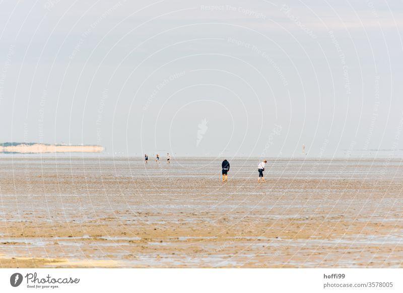 Menschen im Watt - Wattwanderung an der Nordsee Wattwandern Wattenmeer Ebbe ebbe und flut Strand Wasser Küste Sand Horizont Gezeiten Meer Flut Schlick Schlamm