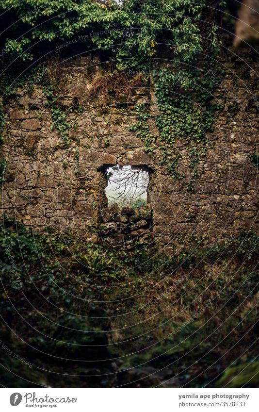 irisches historisches Schlossfenster im Wald Republik Irland galway Burg oder Schloss Burgmauer Burgruine antik Außenaufnahme Farbfoto alt Sehenswürdigkeit