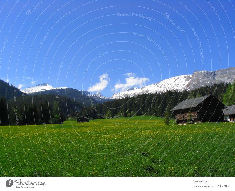 Frühling in Flims Sonne Wiese Berge u. Gebirge Schweiz Löwenzahn