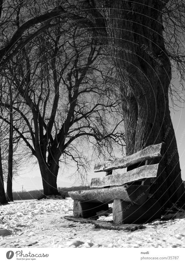 Momente der Ruhe weiß Baum schwarz Schnee Erholung Holz sitzen Bank