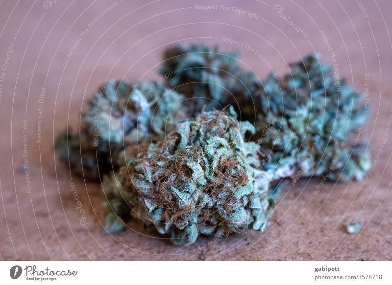 Hanfblüten Cannabis-Knospe Rauschmittel Pflanze Farbfoto grün Menschenleer Alternativmedizin Rauchen ungesetzlich Schwache Tiefenschärfe THC